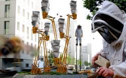 7 ruche ville