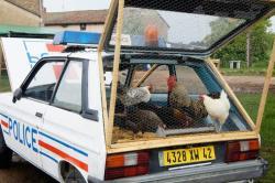 Benedetto bufalino police car chicken coop 5