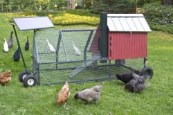 Chicken coop lead 537x357