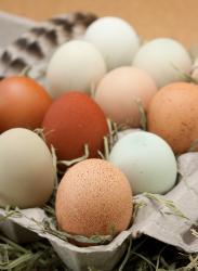 Dozen farm fresh eggs