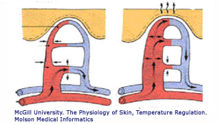 Fig vasodilatation