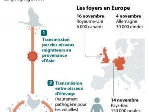 Medecine la grippe aviaire h5n8 est en europe 14766620