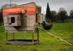 Modern coop chicken sustainable reclaimed