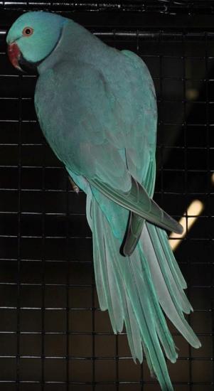 Oiseau 13