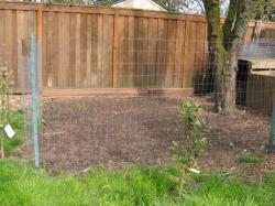 Plant grass backyard chickens