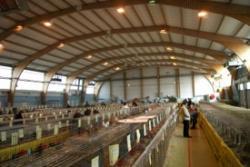 Salon aviculture x275 b2730