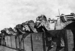 Tiere ersten weltkrieg 3