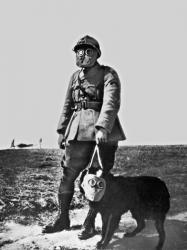 Tiere ersten weltkrieg 5
